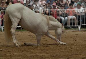 Comment dresser un cheval ?