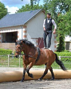 Acheter un cheval pour un cavalier expérimenté
