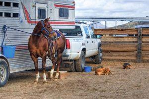 Comment atteler un cheval ?