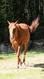 Comment détendre son cheval ?