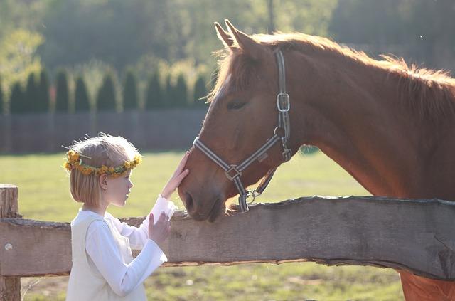Comment éduquer son cheval ?
