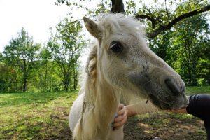Comment bien soigner son cheval ?