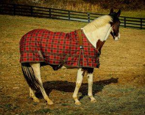 Le choix de la couverture cheval
