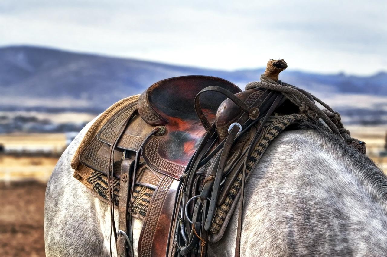 Comment choisir une selle de cheval ?