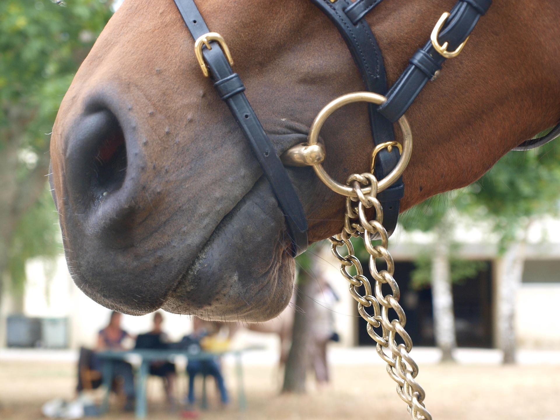 Comment choisir son mors de cheval ?