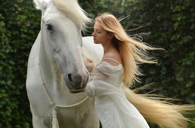cheval affection