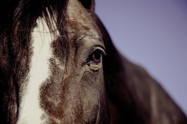 soigner un cheval