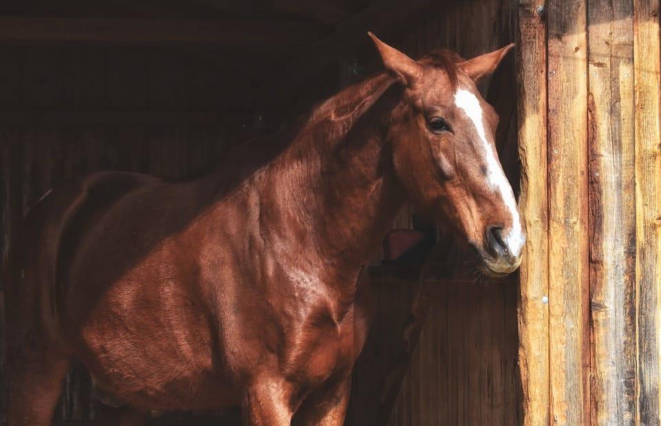acheter un cheval